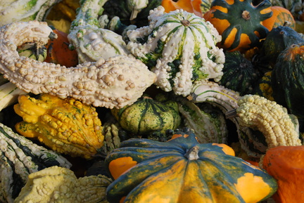 Plethora of Gourds