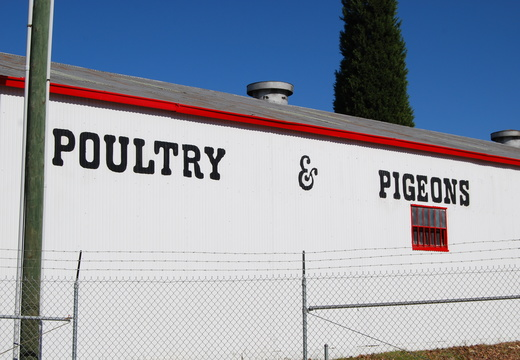 Poultry and Pigeons Building