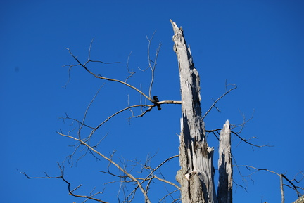 Dead Tree and Crow