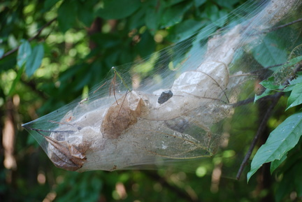 Insect Nest