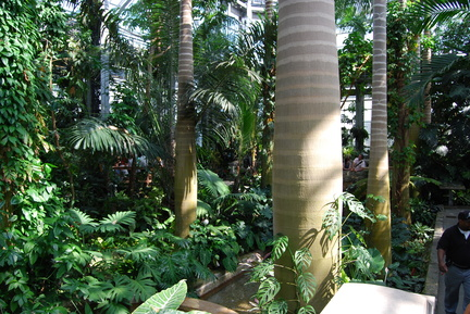 Jungle Room at the US Botanical Garden