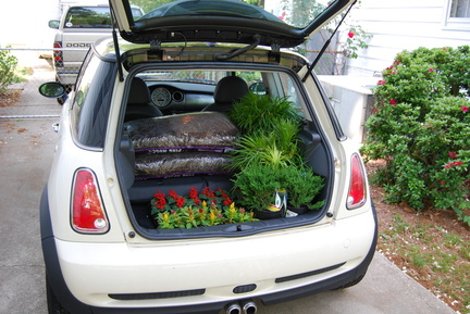 Mini Full of Plants