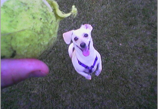 Lucy Playing Ball