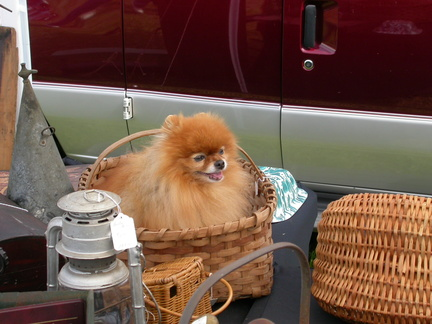 Real Dog in a Basket