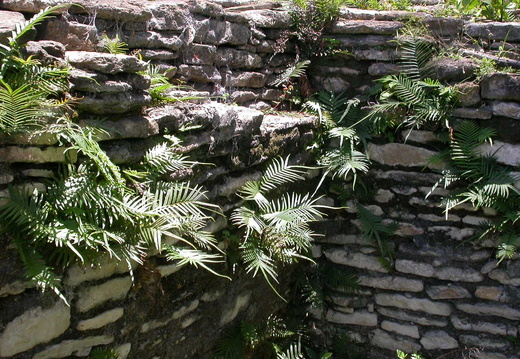 Walls and Ferns