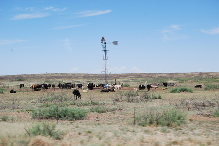 Windmill and Cattle