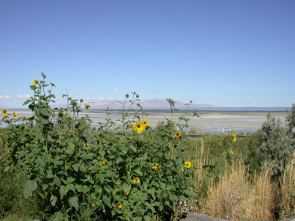 Wildflowers and the Great Salt Lake